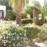 5 Jardín