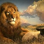 cordero leon